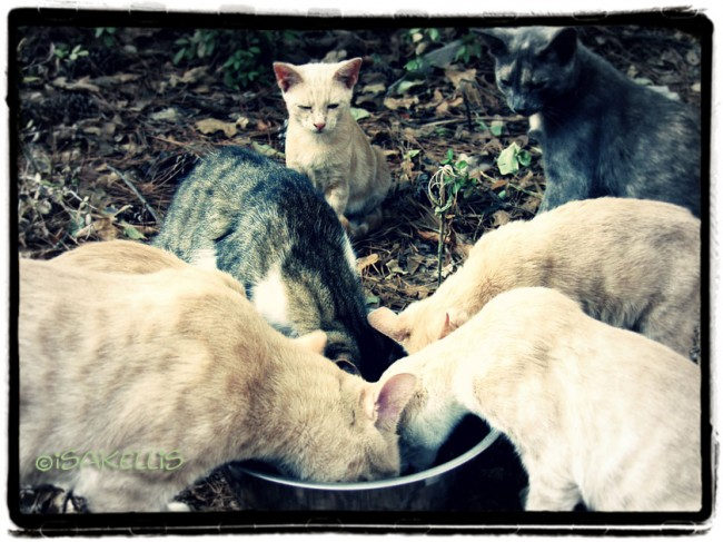 Dinner Bowl Cats