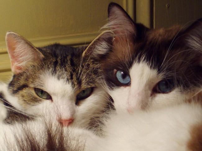 Greta and Olive