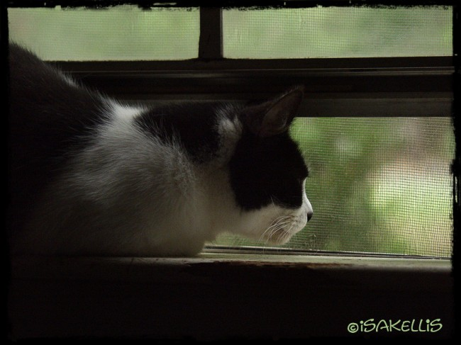 Meha on the bedroom window sill