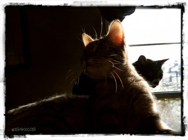 Tessa & Diego / catching the morning sun