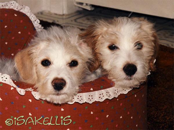 Brie & Isak